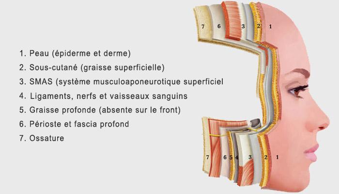 anatomie-faciale