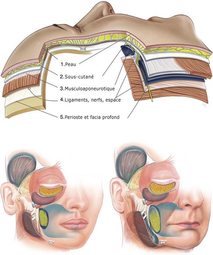 Les couches du visage